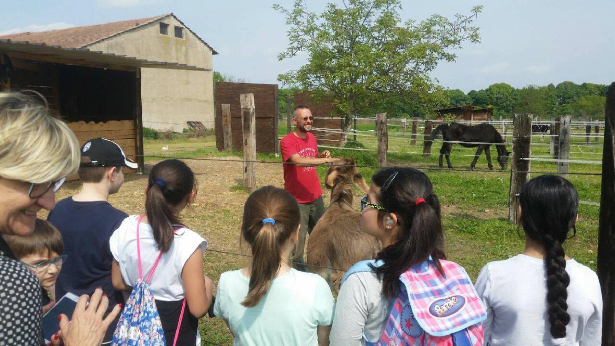 Orari della fattoria capre e cavoli per bambini e famiglie for Porte francesi della fattoria